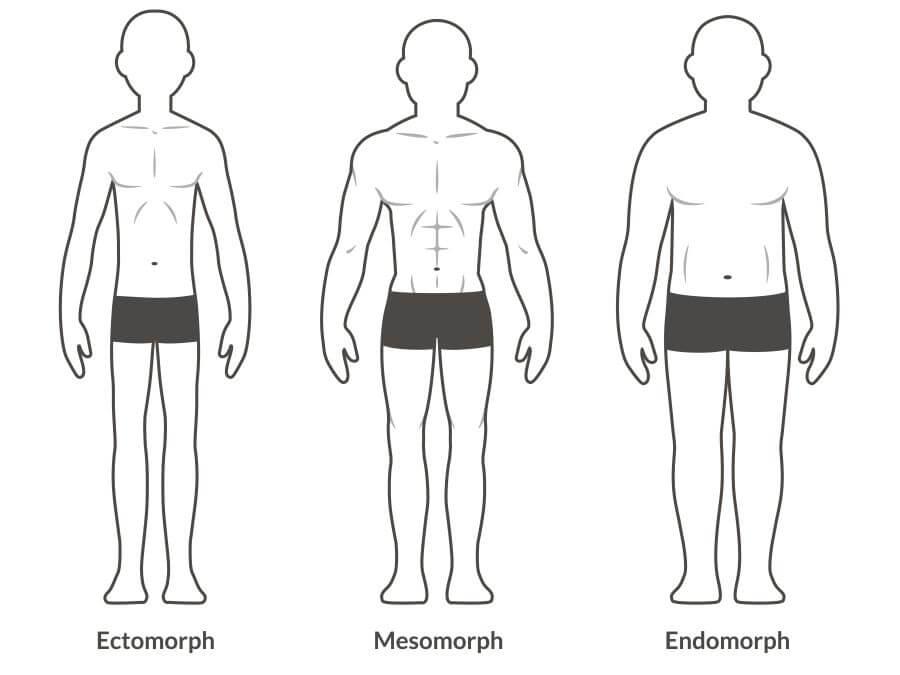 ektomorf mezomorf endomorf muži